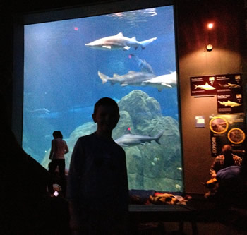 My son standing in front of the shark tank.